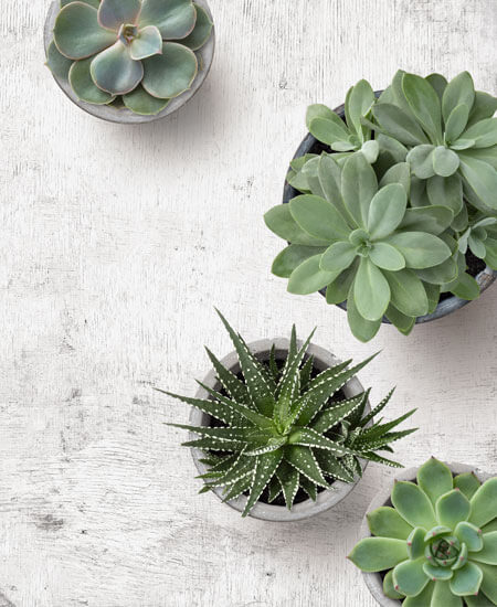 Four Green Plants on a White Table